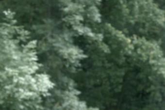 web_arbres_Villa Savoye